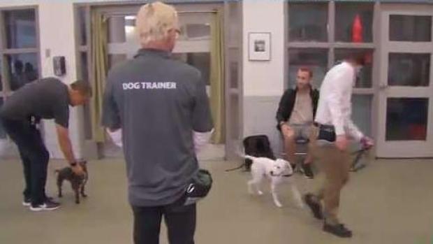 [TLMD - LV - nacional] Cuándo tu mascota y tú necesitan clases de obediencia