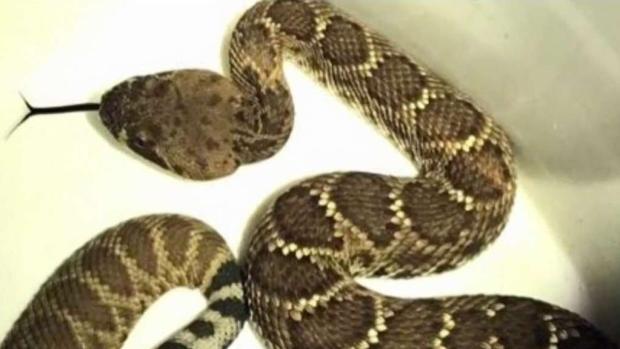 [TLMD - SD] Época de serpientes en San Diego
