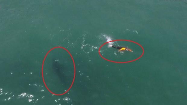 De terror: hombre nada peligrosamente cerca de un tiburón