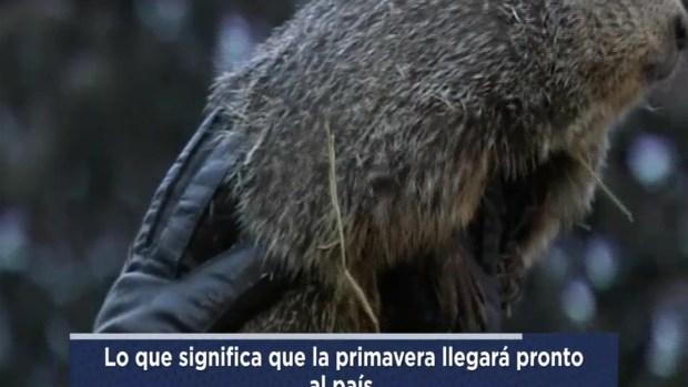 """Marmota Phil """"pronostica"""" fin del invierno"""