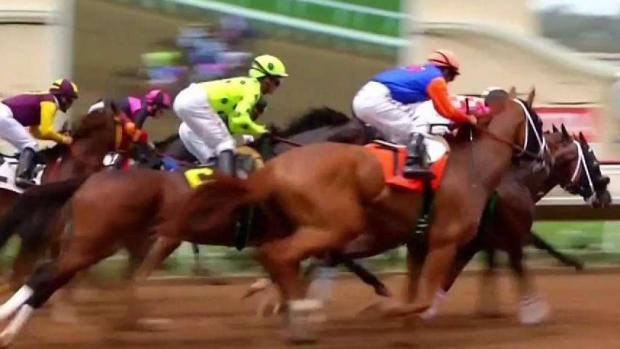 [TLMD - SD] Mueren dos caballos en el hipódromo
