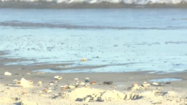 [TLMD - NATL] Niño es atacado por tiburón en isla de Carolina del Norte