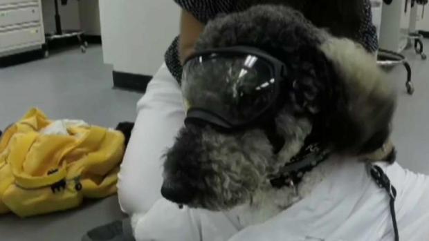 """[TLMD - NY] Puerto Rico tiene primer """"perro de servicio"""" científico"""