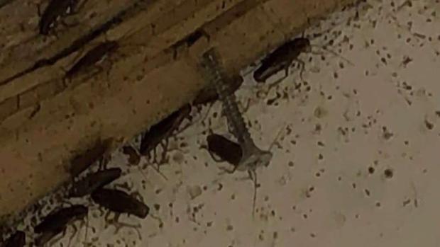 Residentes denuncian infestación de cucarachas en complejo en Silver Spring