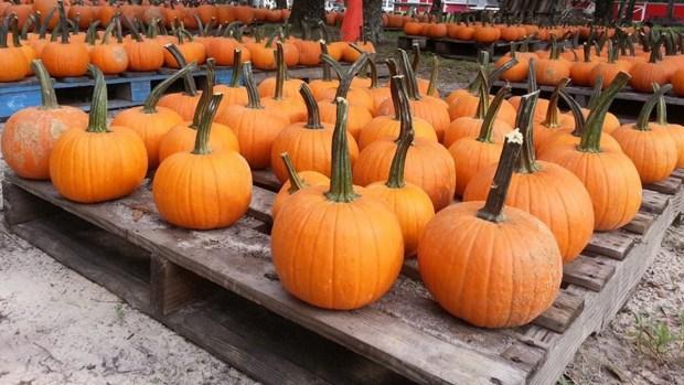 Donde encontrar la calabaza perfecta para el otoño