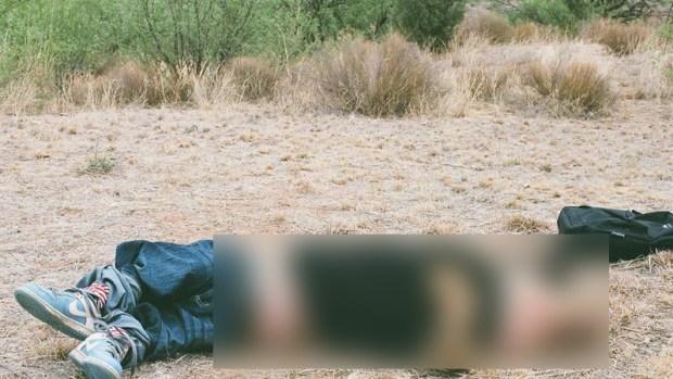 Con cerdos hacen crucial hallazgo sobre muertes de inmigrantes en el desierto