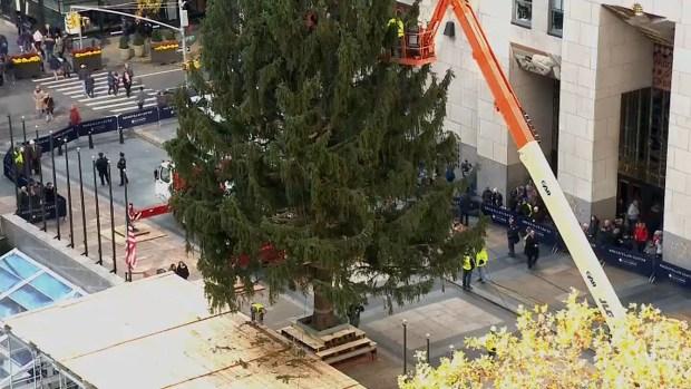 Fotos: árbol navideño llega a la Gran Manzana