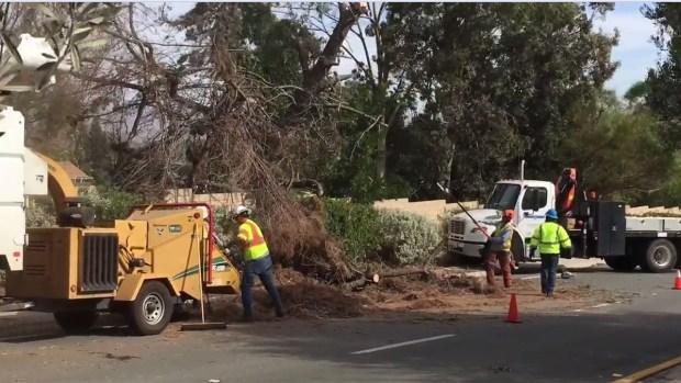 [G] Fuertes vientos derriban árboles en el condado
