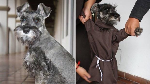"""""""Fray Carmelo"""", el perro fraile que es sensación en Internet"""