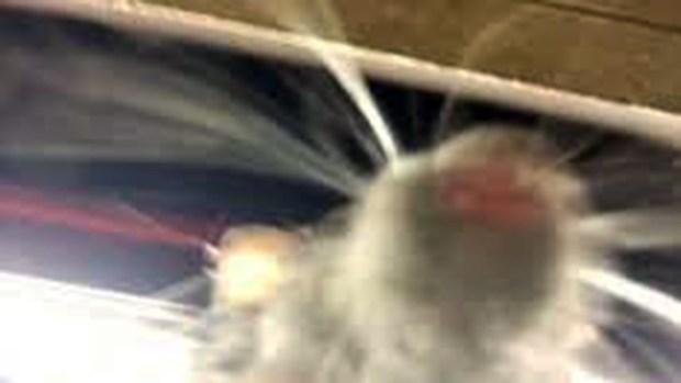 [TLMD - NY] Selfie-Rat se toma Nueva York