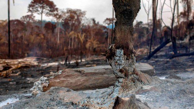 [TLMD - LV] De cerca: las zonas carbonizadas por el fuego en la Amazonía