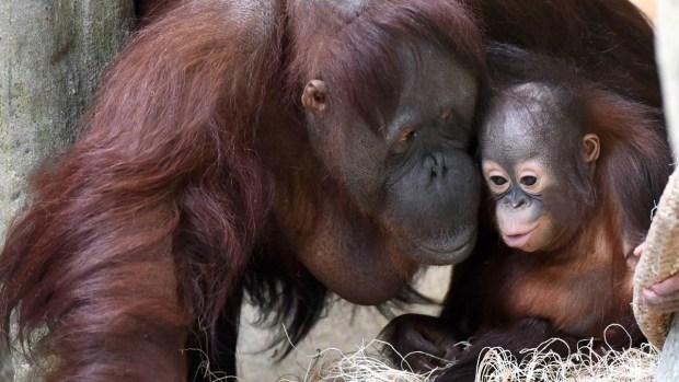 5 maravillosas mamás del reino animal