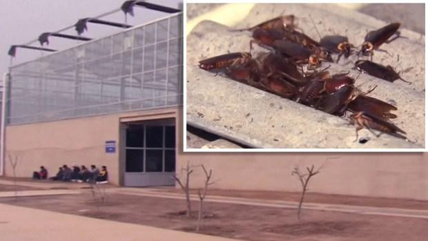La fábrica donde viven mil millones de cucarachas y nadie se queja