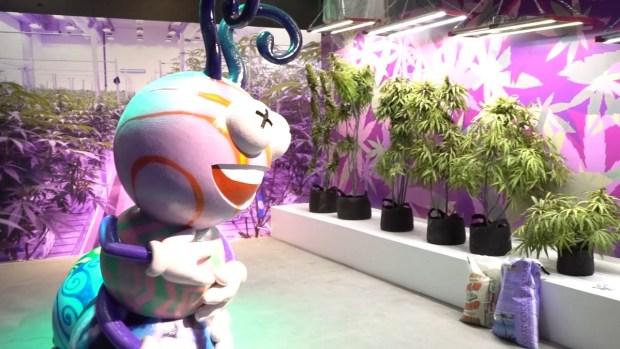 Cannabition: inauguran primer museo de la marihuana en Las Vegas