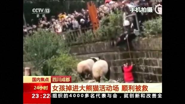 [TLMD - LV] Captado en video; niña cae a jaula de los osos panda