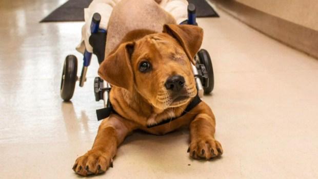[TLMD - LV] Conmovedor video: perrito sobrevive ser arrollado por un tren
