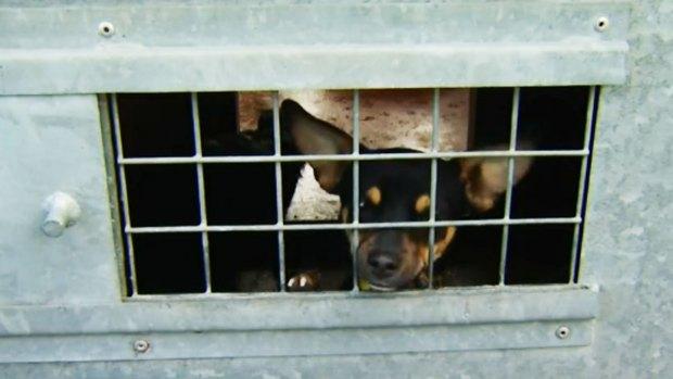 Video: Indignación por abandono de 44 perros