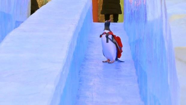 Simpáticos pingüinos se deslizan por toboganes de hielo