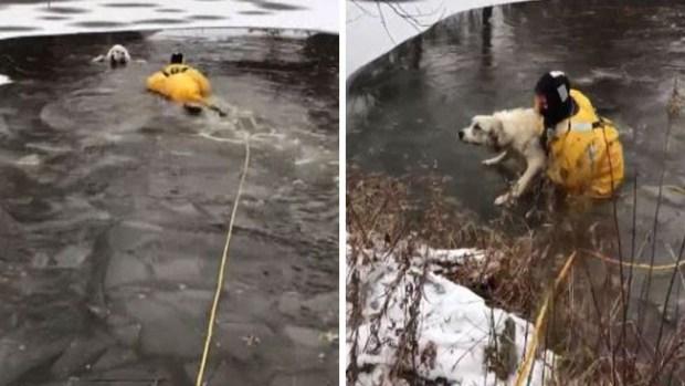 Increíble rescate de perrita que cayó a charca helada