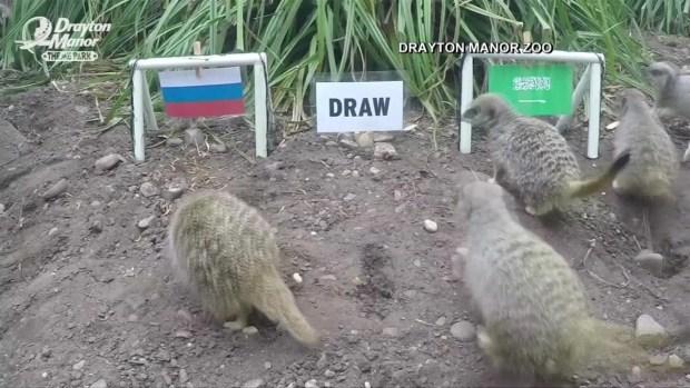 [TLMD - MIA] Suricatas dan sus predicciones para el partido inaugural del Mundial
