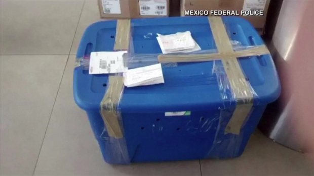 En video: hallan tigre vivo dentro de paquete del correo