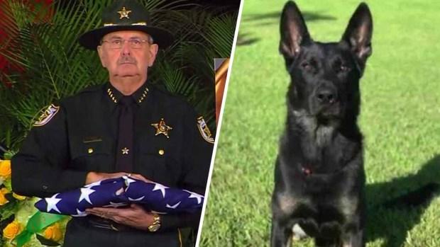 """Emotivo último adiós a """"Cigo"""", el perro policía que dio su vida en Florida"""
