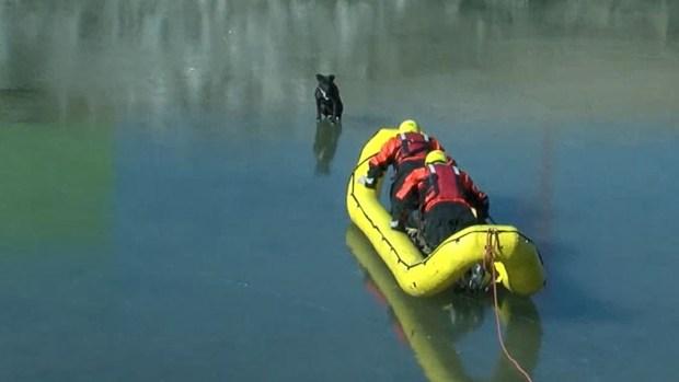 Increíble rescate: salvan a perrito en pleno lago congelado