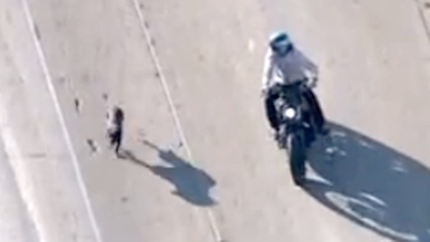 Video: Perro causa caos en la autopista