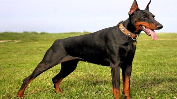 Fotos: Razas de perros peligrosos y agresivos