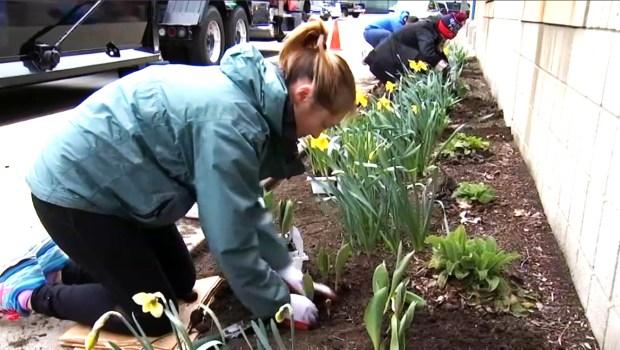 'One Boston Day' promueve actos de amabilidad en la ciudad