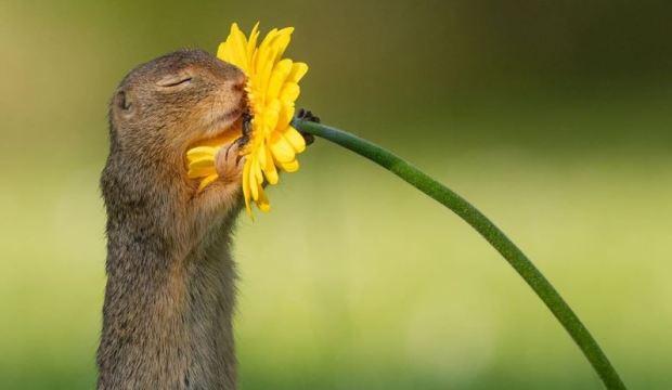 [TLMD - NATL] La verdad tras la foto viral de una ardilla y la  flor