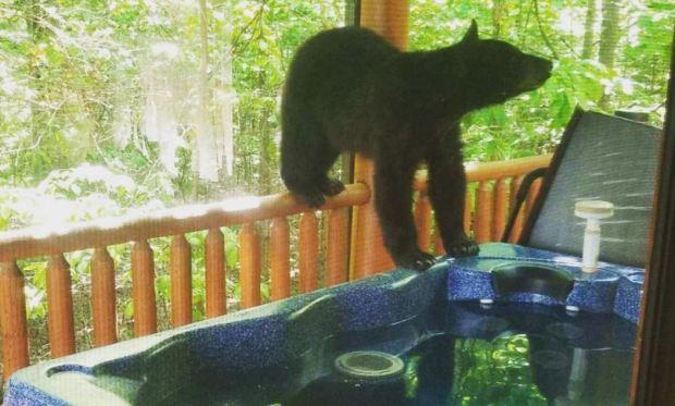 [TLMD - NATL] ¡Sorpresa!, hay un oso en el jacuzzi