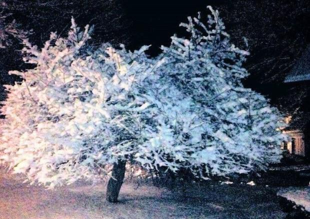 Tus fotos de la primera tormenta invernal en Nueva Inglaterra