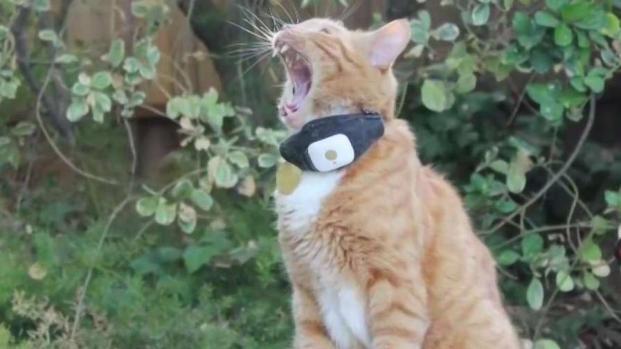 [TLMD - SD] Acusan a vecino de matar a gatos