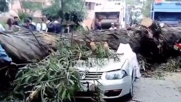 [TLMD - SD] Una familia murió aplastada por un árbol