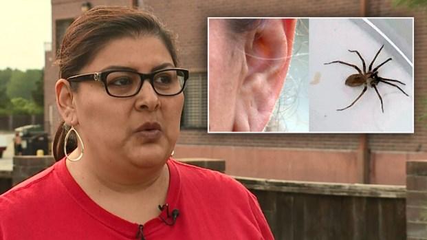 [TLMD - LV] De terror: molestia en el oído resulta ser una araña venenosa
