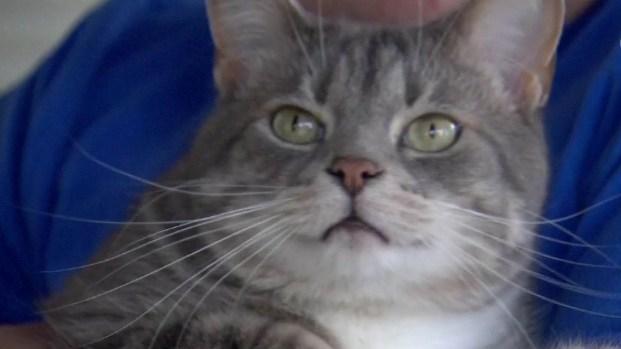 Gatito se pone furioso y envía a un intruso al hospital