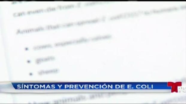 Síntomas y prevenciones de infección e. Coli