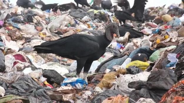Se casan en basurero en Brasil