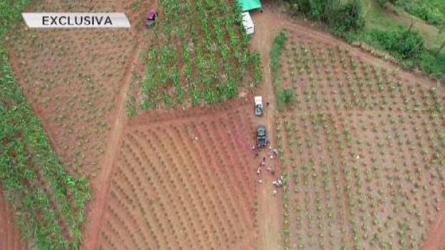 Agricultura utilizará drones para monitorear cultivos