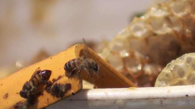 Ataque de abejas deja varios heridos