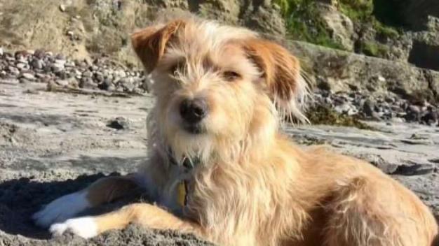 Ayude a los albergues adoptando una mascota