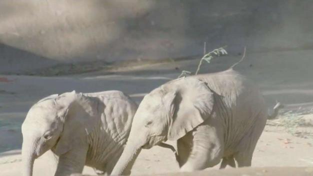 Bebés elefantes en el zoológico de San Diego