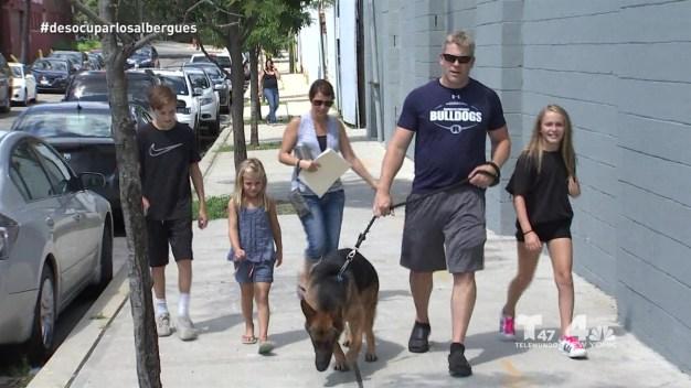 Nueva Jersey marca la diferencia adoptando mascotas