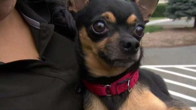 Cientos de mascotas adoptadas en 'Desocupar Los Albergues'
