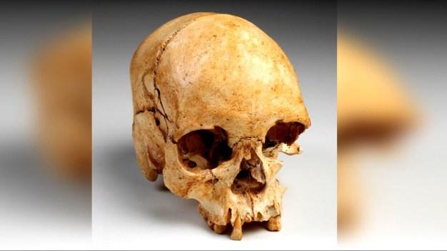 Macabro hallazgo: el cráneo más antiguo de Sudamérica