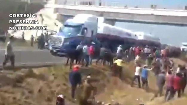 Viral: roban y destazan ganado en plena carretera