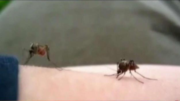 East Boston será fumigado para prevenir mosquitos
