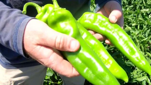 Guerra de chiles: NM pone freno al chile de Colorado