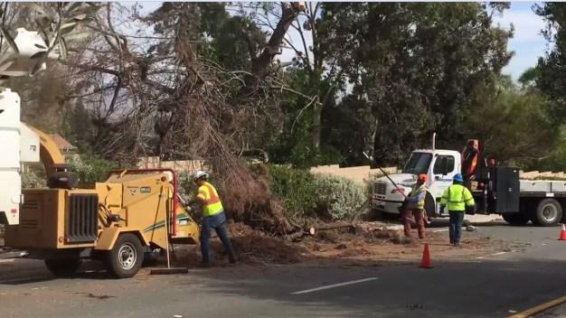 Fuertes vientos derriban árboles en el condado